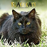 Black Cats 2019 Square Wall Calendar
