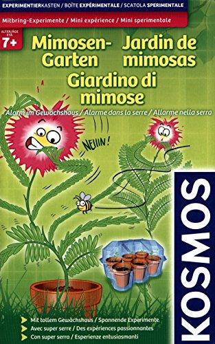 Mitbring-Experimente: Mimosen-Garten