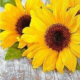 Schöne & Sommerliche Servietten - Sommermotiv: Sonnenblume - Sparpackung: 100 Stück - 33cmx33cm - Tischservietten / Sommerservietten / Dekoservietten