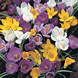 Top Quality Bulbs idea for planting in all areas of the garden, pots, tubs, hanging baskets etc, or naturalising in lawns, boarders or wooded areas