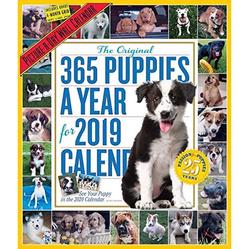 365 Puppies A-Year 2019 Bilder-A-Day Wandkalender -