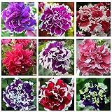 Bornbayb Mixture Colors Petunia Hybrida Seeds Semi di fiori per placcatura del giardino (100 pezzi e 200 pezzi)