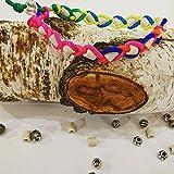 Dogs Company EM-Keramik EM-Keramikhalsband EM Keramik Pipes Halsband Zeckenschut für Hunde (25 cm, Regenbogen)