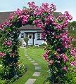 Rosenbogen Classic 120 x 45 x 240 cm von Ing. G. Beckmann KG - Du und dein Garten