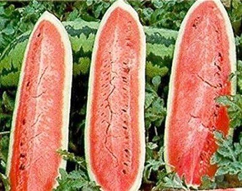 Wassermelone Jubilee - 40 Samen