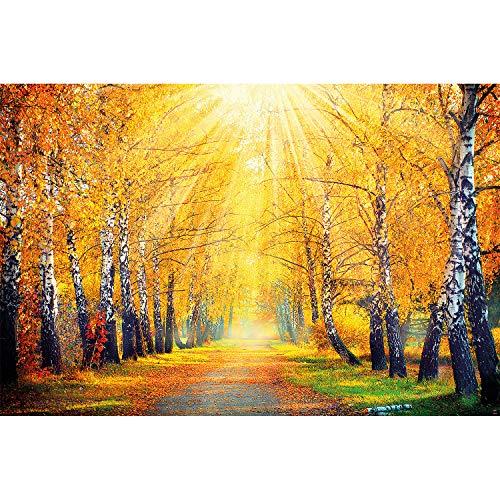 great-art XXL Poster - Fotoposter Goldener Herbst - Allee mit Birken Weg Poster Jahreszeiten Wandposter Wald Landschaft Naturposter Paradies Motiv (140 x 100 cm)