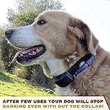Best Dog Bark Collars - AplinK® No Bark Shock Dog Collar with 7 Review