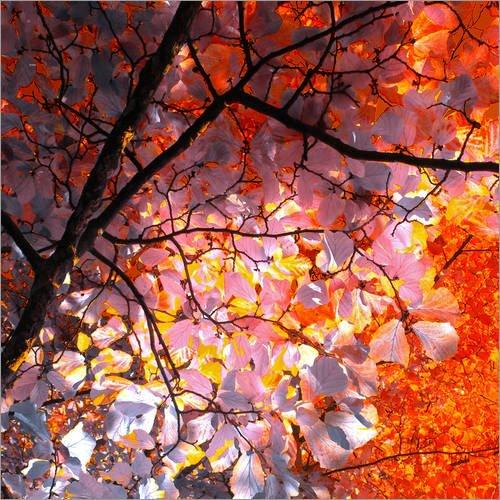 Forex-Platte 70 x 70 cm: Herbstbaum Abstrakt I von blackpool