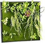 Carlo Milano Pflanzwände: Vertikaler Wandgarten Kurt mit Deko-Pflanzen, 60 x 60 cm (Pflanzenbild)