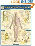Nervous System Laminate Reference Cha...