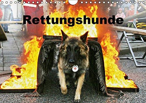 Rettungshunde (Wandkalender 2019 DIN A4 quer): Rettungshunde bei der Arbeit (Monatskalender, 14 Seiten ) (CALVENDO Tiere)