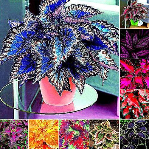 Shoopy Star 100PCS: 20/50 / 100pcs haricots blancs Magic Seeds cau plante croint Mot mege d'amour SC 18