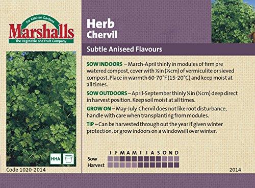 marshalls-semi-erbe-cerfoglio