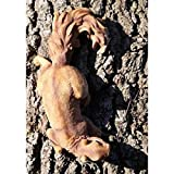 Dekofigur Eichhörnchen, originalgetreu, Lebensecht Gartenfigur
