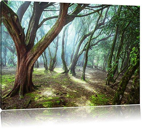 Touch Gerahmt (Wald Format: 120x80 cm auf Leinwand, XXL Bilder fertig gerahmt auf Holzrahmen, Kunstdruck auf Wandbild auf Rahmen)
