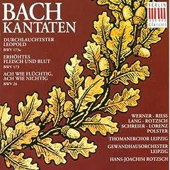 Durchlauchtster Leopold, BWV 173a: Aria: Unter seinem Purpursaum (Soprano, Bass)
