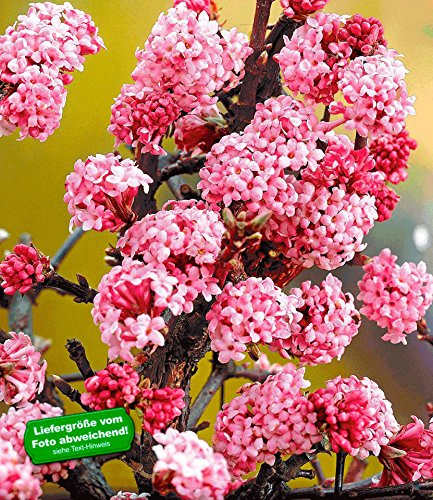 Baldur Garten Garten Blumen Pflanzen Garten