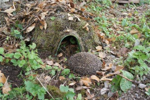 Wildlife World Habitat Hedgehog Home
