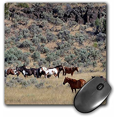Danita Delimont - Horses - USA, Oregon, Harney County. Wild horse on BLM-managed Steens Mountain. - MousePad (mp_208166_1)