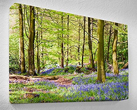 WOODLAND BLUEBELLS Stretched Canvas Print 20