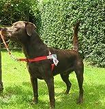 Walk Your Dog With Love Hundegeschirr, gegen Ziehen Leinenbefestigung vorne, Rot