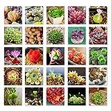 ESHOO 100 Stück Mix Sukkulenten Samen Bonsai Pflanze Bepflanzte Blumensamen für Hausgarten