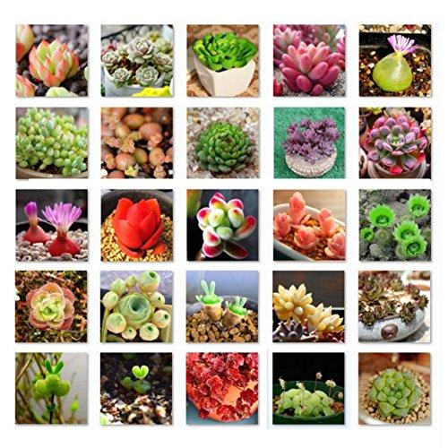 ESHOO 100 Stück Mix Sukkulenten Samen Bonsai Pflanze Bepflanzte Blumensamen für Hausgarten - Kaktus Mix