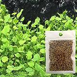 Blaward Aquarium Wasser Gras Samen Gartenpflanze Aquarium Grassamen Indoor Beautifying Pflanzensamen
