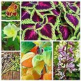 Paradise Garden - Samen von 6 Blütenpflanzenarten - 6 Samenpakete