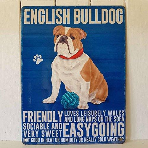 English British Bulldog Metall Schild Freundlicher geselliger unbeschwerten Hund (Girl Metall Schild)