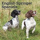 English Springer Spaniels International Edition 2019 Square Wall Calendar