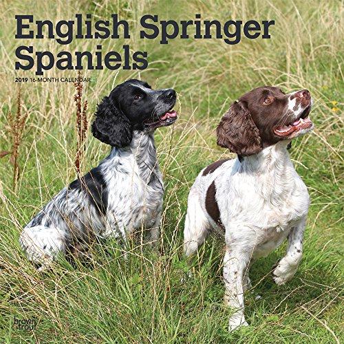 English Springer Spaniels International 2019 - 18-Monatskalender mit freier DogDays-App: Original BrownTrout-Kalender [Mehrsprachig] [Kalender]