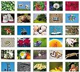 Symbole des Gl?cks/Symbols of luck/Symboles de bonheur: Postkartenbuch