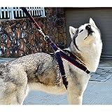 CDQ verhindert Zerren Hunde Leine Geschirr, Freiheit Verstellbar und Heavy Duty Denim Hund Training Walking Leine Halsband für große/medium/kleine Hunde