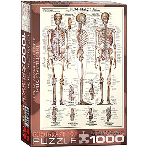 EuroGraphics Das Skelett - 1000 Teile (Teile Skelett)