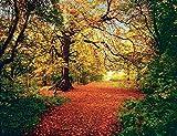 Fototapete AUTUMN FOREST 388x270 Laub Herbstwald Wald Waldweg rot gelb braun
