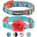 Blueberry Pet Doppelpack Mix & Match Perfekter Blauer Himmel Designer Hundehalsband mit Blumen-Deko, S