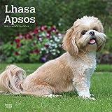Lhasa Apsos - Lhasaterrier 2019 - 18-Monatskalender mit freier DogDays-App (Wall-Kalender)
