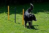 Dog Agility Starter-Set - 3