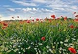 wandmotiv24 Carta da parati Prato di fiori L 300 x 210 cm - 6 parti Murales, sfondi motivazionali, non tessuti Papavero, campo, cielo, cucina M0493