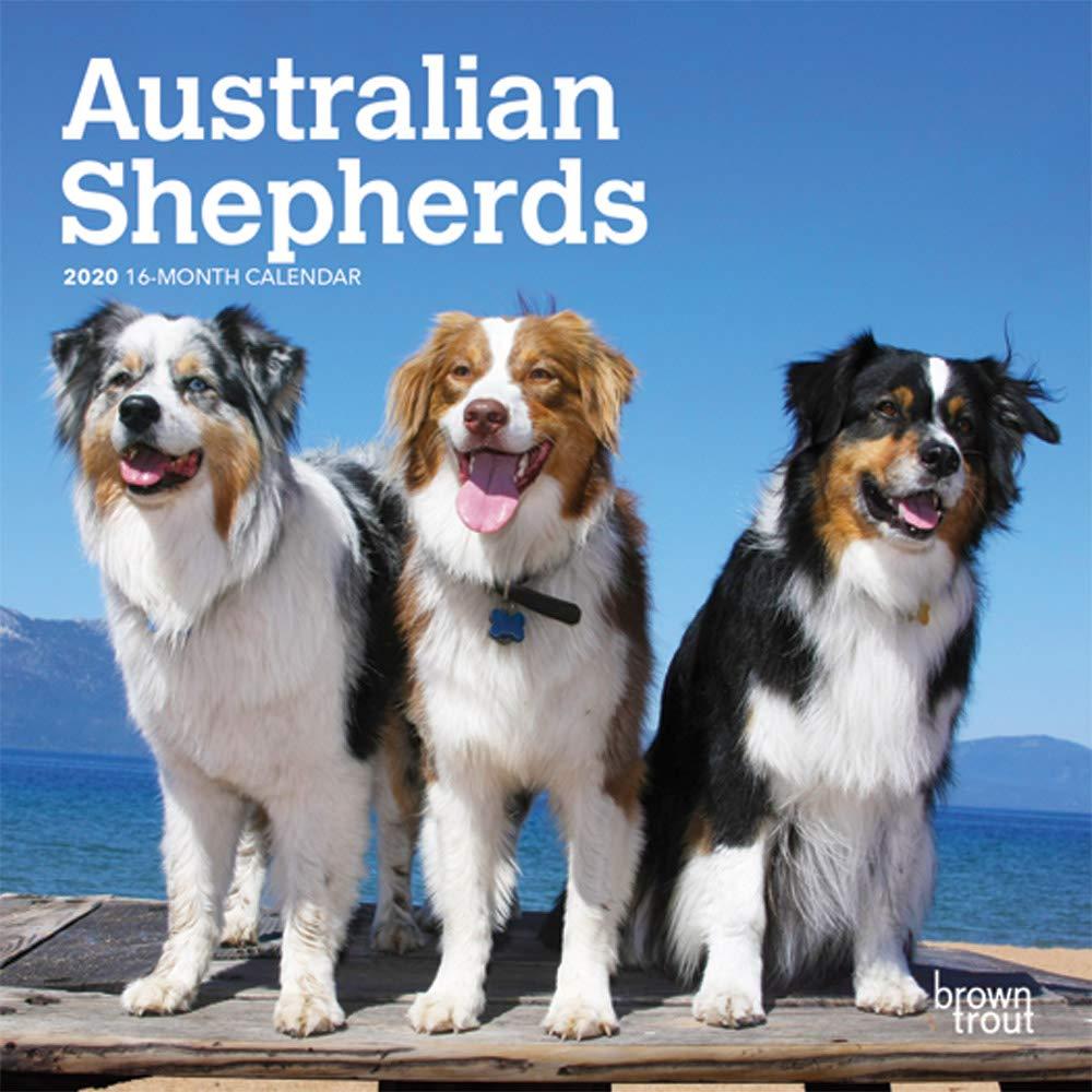 Australian Shepherds 2020 Calendar