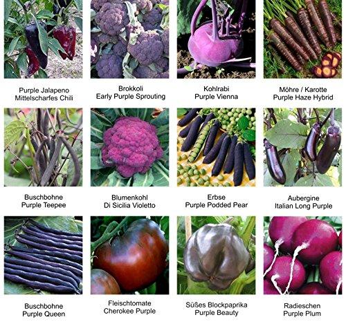Samen - Saatgutsortiment - Set - Mix - Mischung - lilafarbiges Gemüse - Erbsen, Bohnen, Brokkoli, Blumenkohl und Vieles mehr - 12 Sorten - 555 Samen