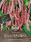 Sperli-Samen Buschbohne Borlotto rosso