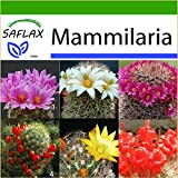 SAFLAX - Kakteen - Mammilaria Mischung - 40 Samen - Mit Substrat - Mammilaria Mix