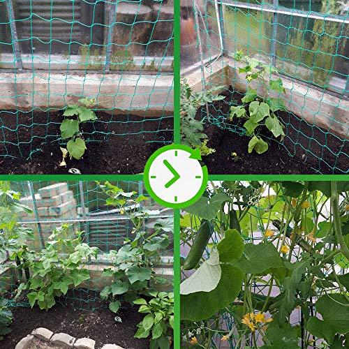 GardenGloss Ranknetz mit Großer Maschenweite - 3