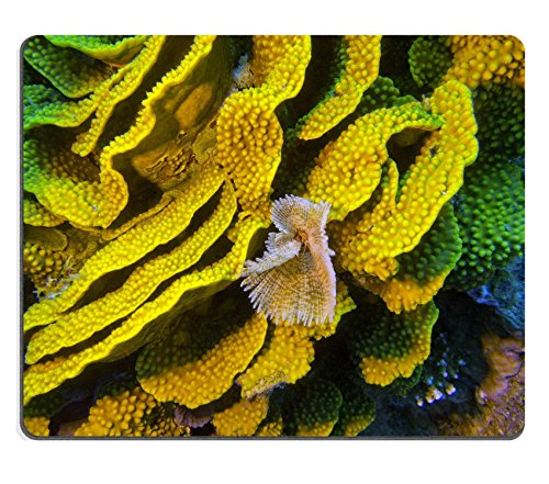 luxlady Gaming Mousepad-ID: 40184910Coral Reef mit Gelb turbinaria mesenterina und Fan Wurm am Ende Tropical Sea -
