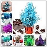 IDEA HIGH Samen-Garten Topfpflanze 30 Stück seltene blaue Zypresse Bonsai-Baum, Bonsai für Blumentopf Pflanzgefäße: gemischt