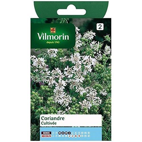 Vilmorin - Sachet graines Coriandre cultivée