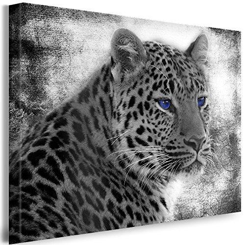Qn Poster (Julia-art Leinwandbilder - Leopard blaue Augen Bild 1 teilig - 70 mal 50 cm Leinwand auf Rahmen - sofort aufhängbar ! Wandbild XXL - Kunstdrucke QN.34-3)