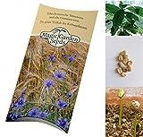 Saatgut Set: 'Kaffee', Tiefland-Kaffee und Arabica, je 5 Samen zur Anzucht im Topf für die beiden wohl berühmtesten Kaffeesorten in schöner Geschenkverpackung